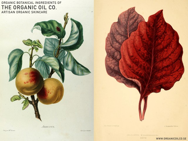 Aprikos - Prunus Armeniaca & Amaranth. Tha Organic Oil Co. Botanical ingredients