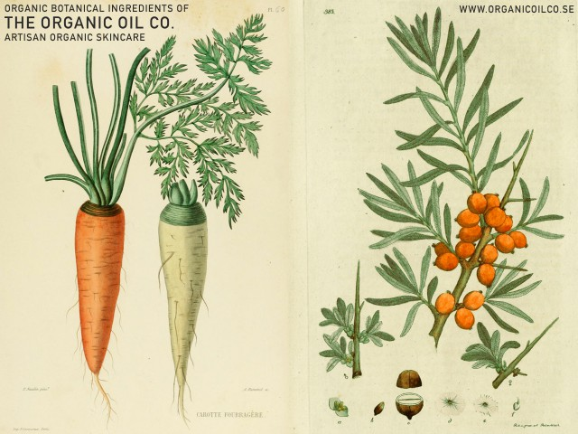 Morot - Dacus carota & Havtorn - Hippophae Rhamnoides - The Organic Oil Co. Botanical ingredients