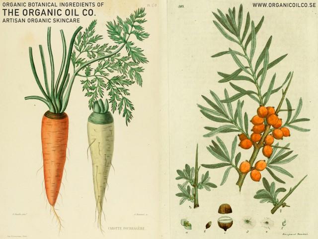 Morot - Dacus carota & Havtorn - Hippophae Rhamnoides - The Organic Oil Co. Botanical ingredients